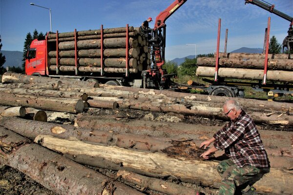 Jozef Kmeť ukazuje, ako lykožrút zničil stromy pod kôrou.