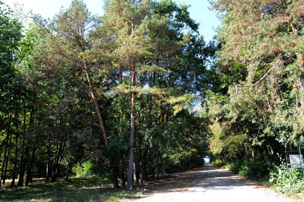 Vedenie mesta sa netají, že chce vysporiadať pod lesoparkom všetky pozemky. Bude to stáť najmenej 7,6 milióna.