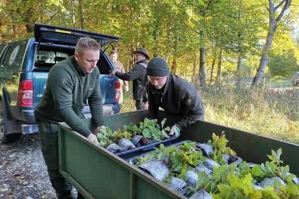 Lesníci privážajú sadenice duba, ktoré svojpomocne vypestovali. Ilustračné foto.