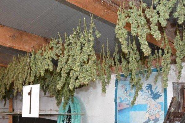 Sušiaca sa rastlina.