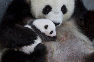 Matka Meng Meng so svojím mláďaťom v berlínskej zoo.