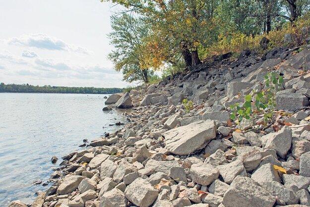 Na južnej strane ostrova obmývanej Dunajom vodohospodári v minulosti obložili brehy veľkými kameňmi. Niektoré druhy vtákov ako brehuľa hnedá tak prišli o hniezdiská.