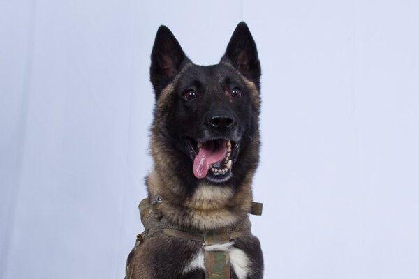 Pes, ktorí sa zúčastnil akcie proti Bagdádímu.