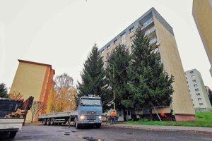 Smrek pochádza zo Smrekovej ulice. Vyrúbaný bol pre tienenie na základe žiadosti občanov o výrub stromu.