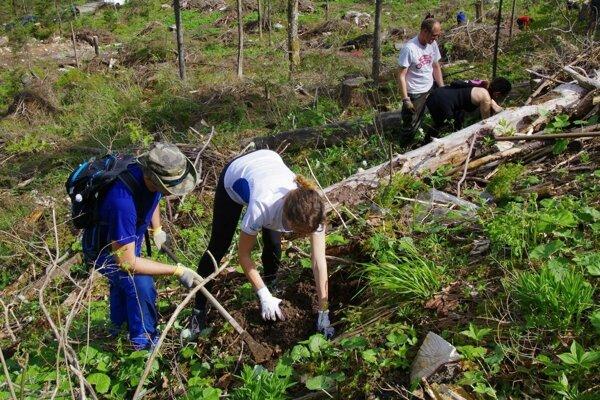 Do zničených oblastí vysádzali smreky, smrekovce, borovice či jedle, no aj javory, jasene, jelše, buky, bresty a jarabiny.
