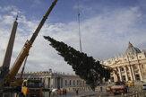 Na vatikánskom Námestí sv. Petra už stojí vianočný stromček (foto)