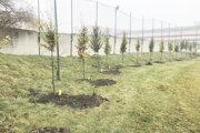 Nové stromy pri štadióne.