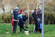 Dobrovoľníci pri sadení stromov.