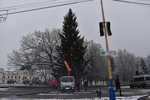 Vianočný stromček v Humennom bude živý, nie umelý.