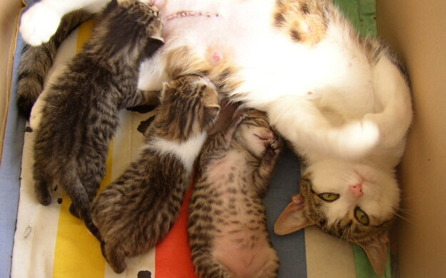 Adoptovať zvieratko je možné aj virtuálne.