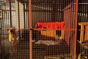 Podozrenia na obchodovanie so psami sa nepotvrdili.