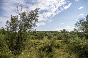 Chránená oblasť na žitnom ostrove - ostrov Kopáč.