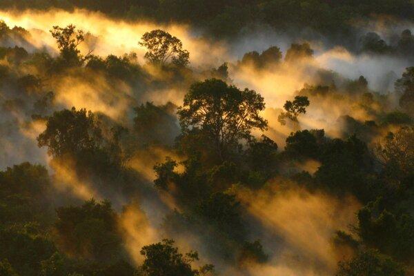 Amazonský dažďový les. Jeho schopnosť vstrebávať oxid uhličitý zo vzduchu rapídne slabne.