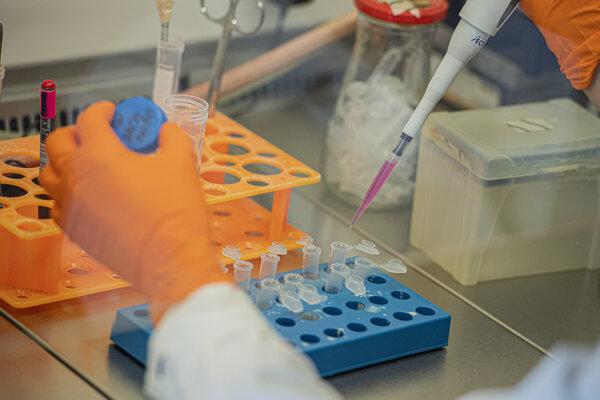 Testovanie vzoriek na prítomnosť nového koronavírusu.