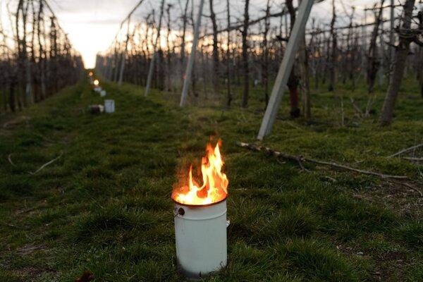 Parafínové sviece, ktoré sa používajú na ochranu pred mrazom v ovocnom sade pri obci Branovo v okrese Nové Zámky v utorok 24. marca 2020.