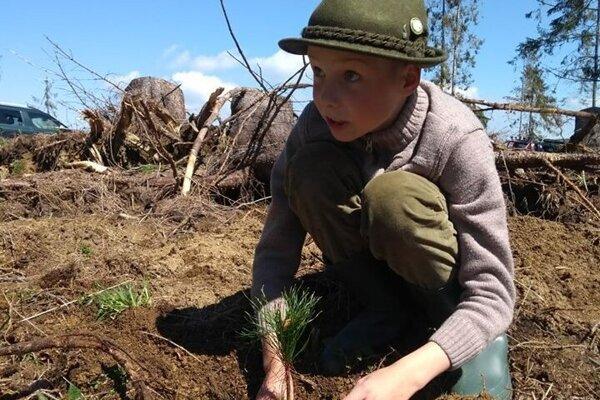 Zalesňovanie je dôležitou aktivitou.