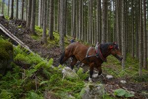 Sťahovanie dreva v Bielovodskej doline.