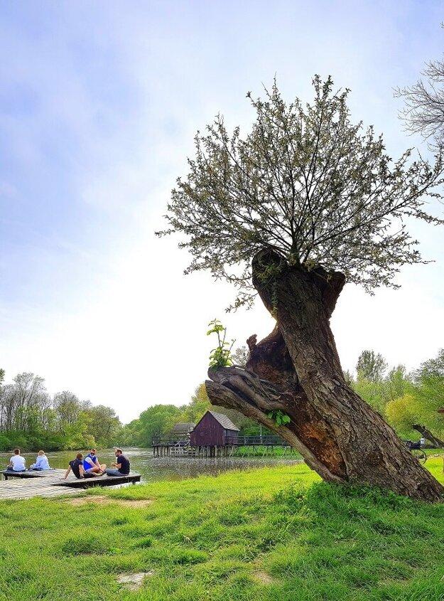 Vodný kolový mlyn Tomášikovo