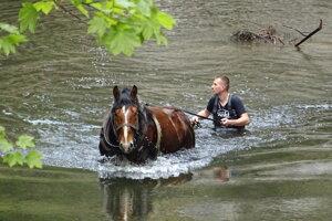 Koník v národnom parku pomáhal čistiť rieku Hornád.