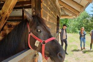 Na snímke kôň v jednom z boxov novej prestupnej stanice Huculskej magistrály pri chate Šopisko v lokalite Skorušina pri Klenovci v okrese Rimavská Sobota.