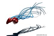 Počítačová vizualizácia pohybu skutočného pohybu spermie. Takmer 350 rokov sa vedci domnievali, že ich bičík sa hýbe podobne ako had. Skutočnosť je však celkom iná.