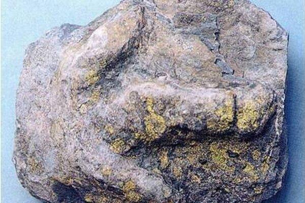 Jedinečná stopa dinosaura Coelurosaurichnus tatricus ztriasu Tatier.