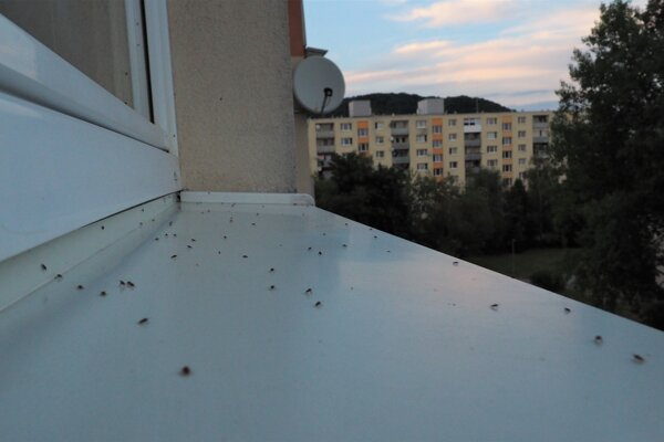 Problém zaznamenali v bytovke na Sídlisku III.