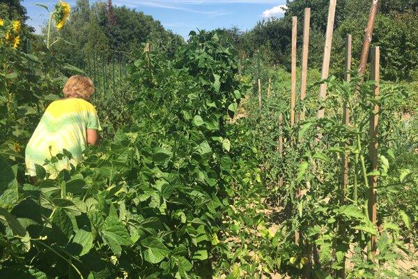 Pestovanie bolo kedysi skôr výsadou dôchodcov, dnes po záhradkách túžia aj mladé rodiny.
