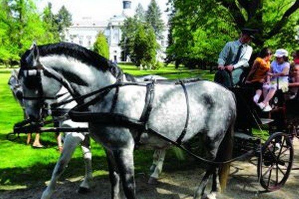 Kone pred nákazou ochránime, upokojuje národný žrebčín.