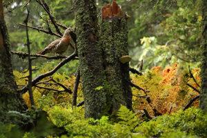 Sliepka hlucháňa je v lese dokonale maskovaná.