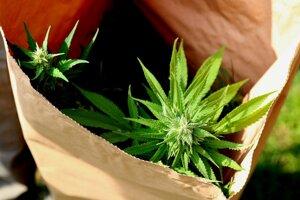 Polícia zaistila rastliny ešte v septembri.