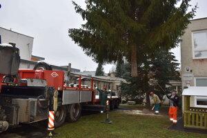 Vianočný strom rástol v areáli MŠ Osloboditeľov.