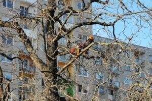 Arboristi odborne ošetrili stromy v Smižanoch.
