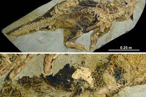 Fosília Psittacosaura s jedinou známou zachovanou kloakou.