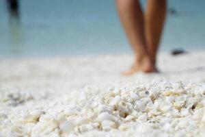 Pláž White shell beach, ktorá je celá pokrytá mušličkami.