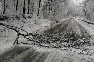 Stromy popadali po pondelkovom snežení.