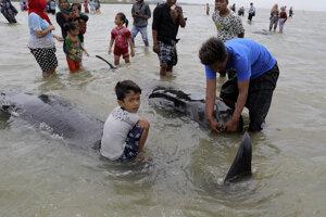 Hromadné uviaznutie delfínov na indonézskom pobreží.