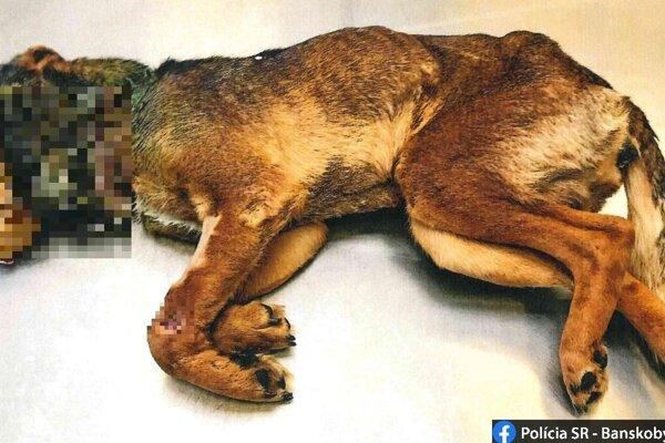 Na smrť utýraný psík.