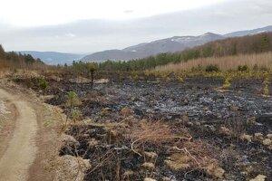 Požiar zničil plantáž vianočných stromčekov v lokalite Šarvíz neďaleko rozhľadne Háj.