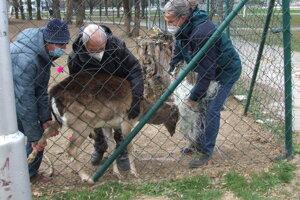 Zviera museli držať traja chlapi.