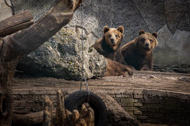 Kým plaché zvieratá si neprítomnosť ľudí užívajú, medveďom a papagájom návštevníci spestrujú každodennú rutinu.