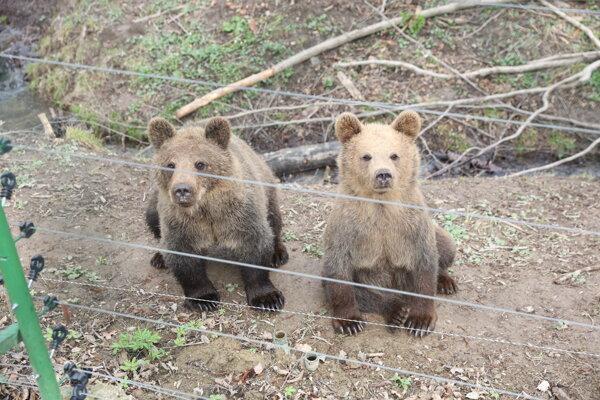 Na návštevníkov čakajú aj tieto medvede.