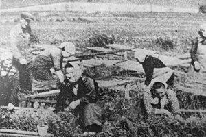 Záhradníctvo. Dnes už málokto vie, že v Košťanoch nad Turcom bolo záhradníctvo. V roku 1961 osemčlenný kolektív žien pod vedením Emila Pospiecha vypestoval 1084 metrákov zeleniny. Kuriozitou bolo pestovanie pomarančových paradajok, ktoré pán Pospiech aklimatizoval 10 rokov a z jedného kra zobral úrodu 20 kg, pričom najväčšie plody vážili 60 dkg.