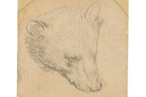 Kresba renesančného maliara Leonarda da Vinciho.