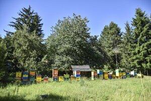 Včelia lúka pri horárni Krasňany.