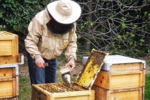 Včelár Tomáš Blaškovič kontroluje úle v Dúbravke.