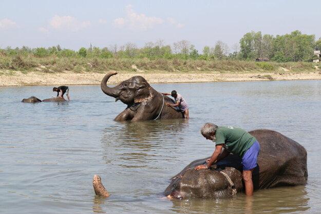 Sloní