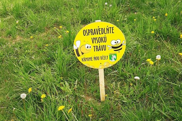 Včelám pomôže nekosenie niektorých plôch vmeste aj výsadba lúčnych kvetov.