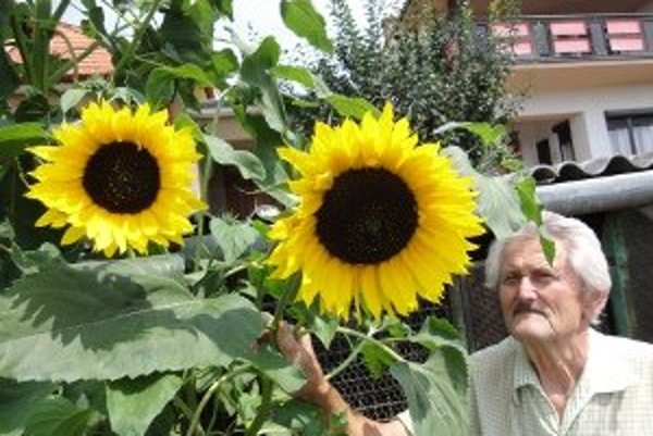 Na jednej slnečnici rastie vyše tridsať kvetov.