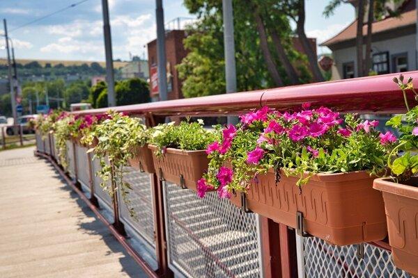 Prešov len nedávno rozvešal po meste kvetináče s kvetmi. Teraz vyhlásil súťaž o najkrajšiu predzáhradku.